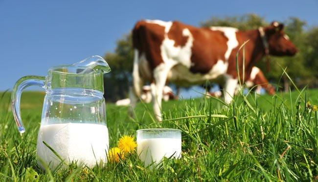 Không tiêu thụ sữa động vật