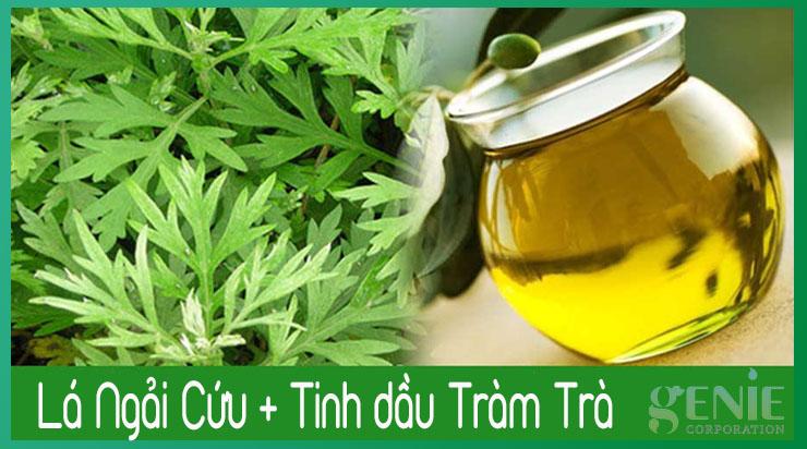 Ngải cứu xông vùng kín với tinh dầu tràm trà