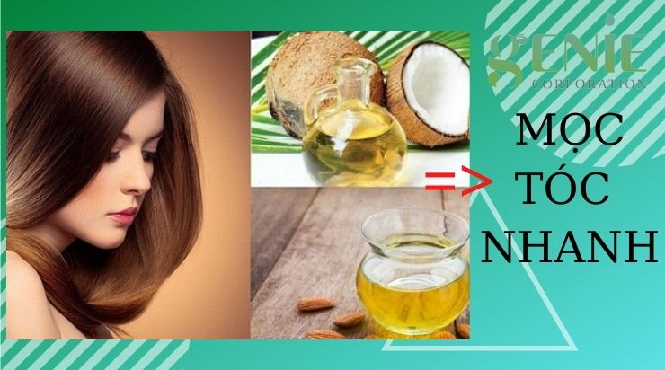 Cách giúp mọc tóc nhanh bằng bia dầu dừa và dầu ô liu