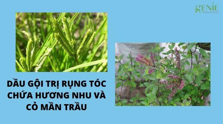 Dầu gội trị rụng tóc chứa hương nhu và cỏ mần trầu