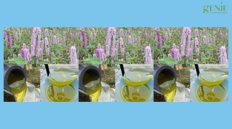 Cách nhận biết mật ong bạc hà ngon