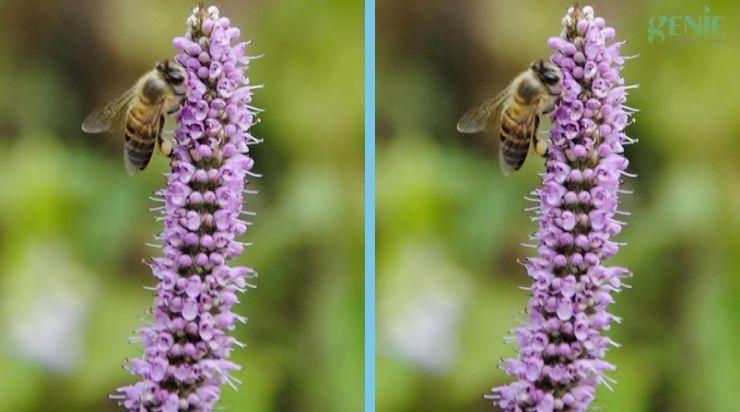 Mật ong bạc hà là gì