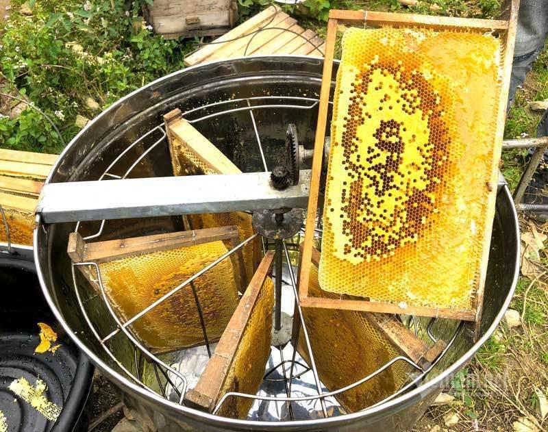 đặc điểm nhận biết mật ong bạc hà