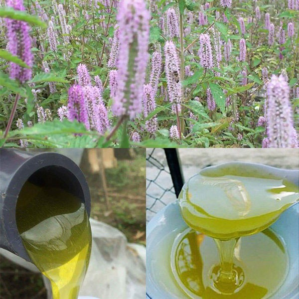 mật ong hoa bạc hà